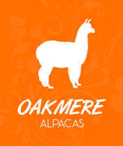 normal-alpaca